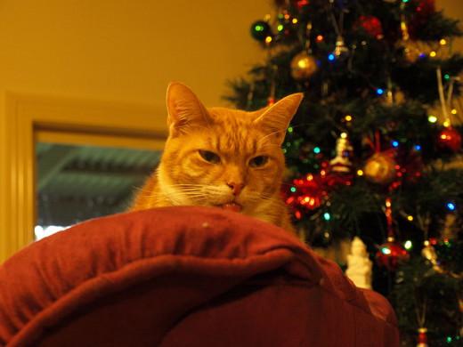 Peek-a-boo Christmas cat