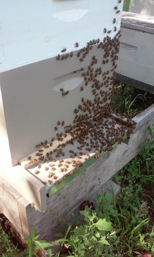 Honey bees gathered on the front of a hive.