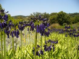 Kirstenbosch Garden Cape Town.