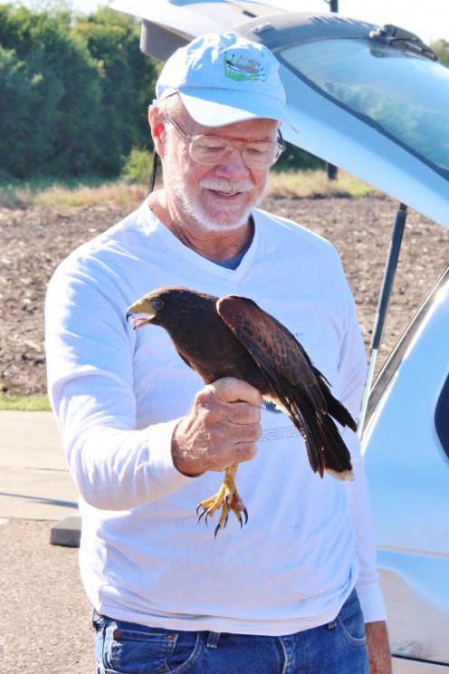 Bill Clark and the Harris Hawk