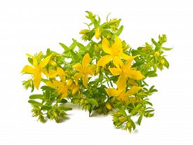 Beautiful plant with many potential benefits but also controversial because of some potential serious side effects.