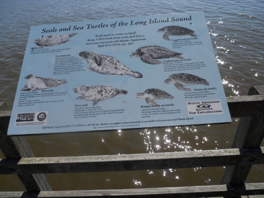 Information Signs Along Boardwalk