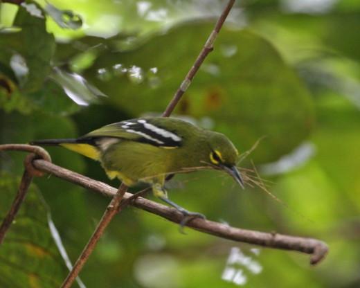 Gathering nesting material