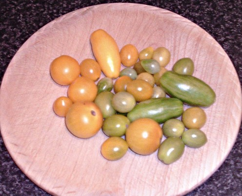 Yellow and unripened, green tomatoes