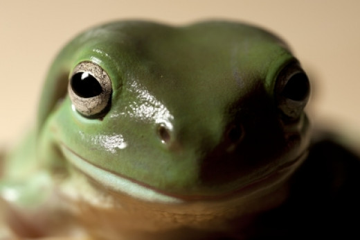 Frogs don't talk, but they still tell us lots of important things about our shared environment.