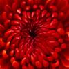 TxTigressDesigns profile image
