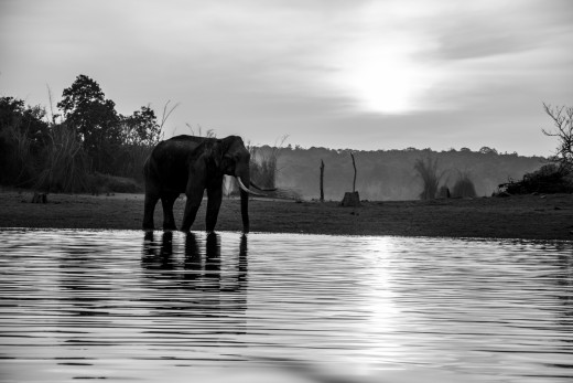 Asian Elephant - on the bank of Kabini River.  Photographed from a motor boat while on a motor boat safari- another way of exploring wildlife of Nagarhole National Park.