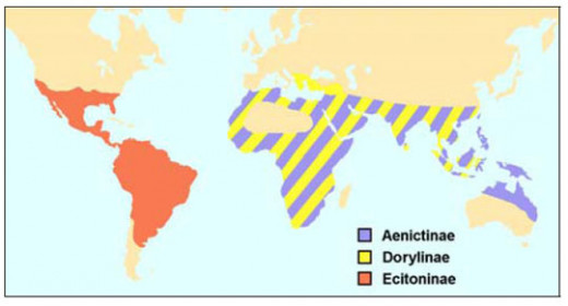 Worldwide Distribution of Army ants
