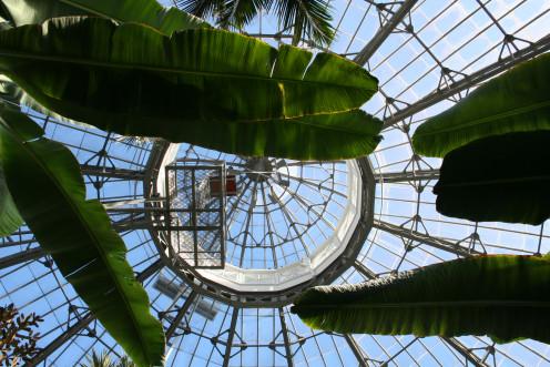Allan Gardens Conservatory Toronto Ontario 2010