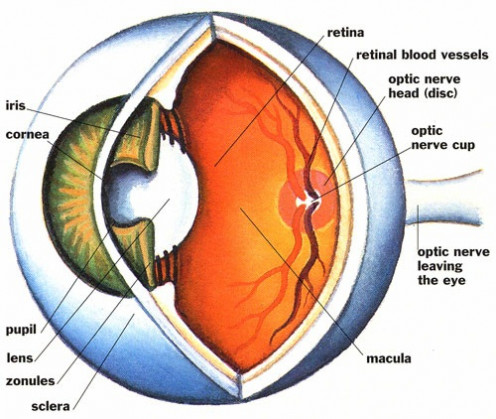 Blindness Symptoms