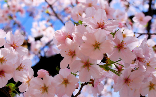 Blossoming of spring