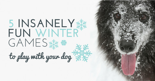 5 Insanely Fun Winter Games to Play With Your Dog