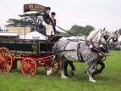 Mexican Brewers, Cuauhtemoc, still use Percheron Carthorses to Pull Beer Wagons
