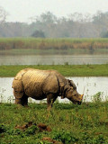 Visiting the Kaziranga World Heritage Forest Reserve in Indian Assam