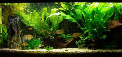 Fully Cycled Tank