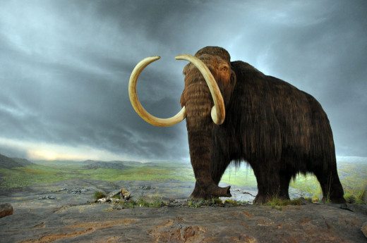 Model of Woolly Mammoth at Royal British Columbia Museum
