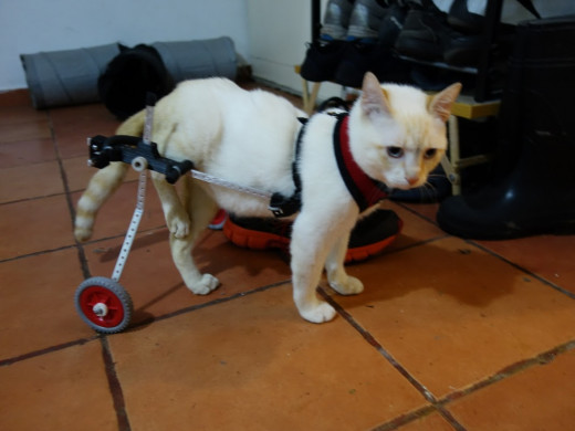 Wheelchairs for Animals