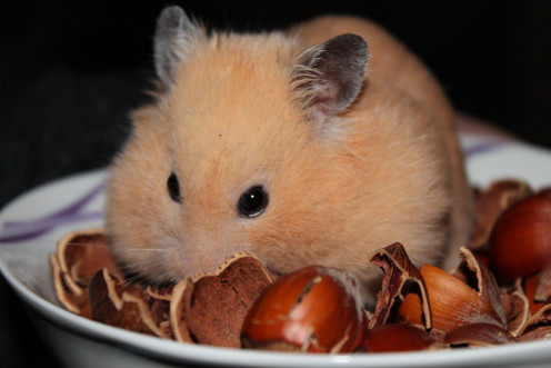 Hamsters and other such animals know that nuts are good-tasting and nutritious. Just be aware of nut allergies!