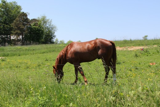 There a number of things to check before allowing your horse out to the pasture, many dangers could be lurking there.