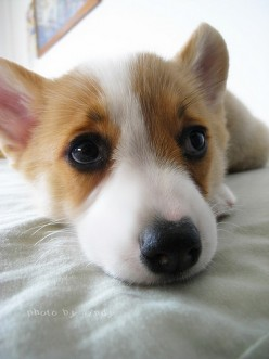 How do dogs grow up and when do they stop growing?