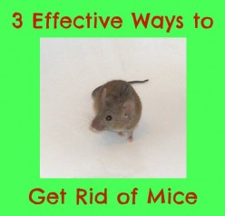 How to Easily Get Rid of Mice in Your Home