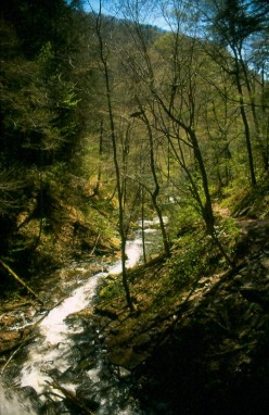 Looking down Ganoga Glen from the top of Erie fall.