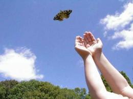 Courtesy of Simon Lake, Our Butterflies