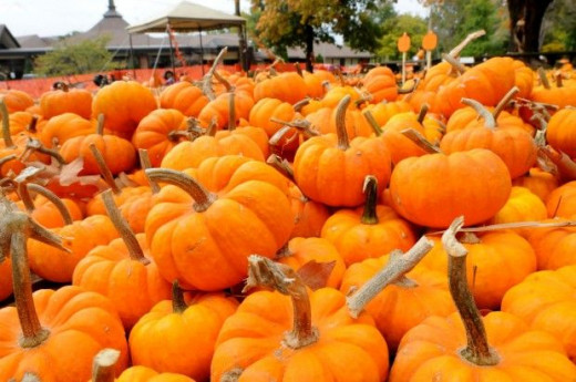 A plethora of pumpkins?
