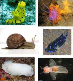 Sea Angels, Sea Pens, and Sea Slugs