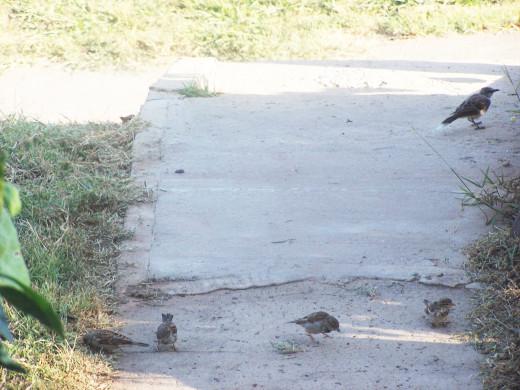 small birds seek food at winter