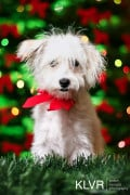 10 Reasons You Shouldn't Give a Pet as a Christmas Gift