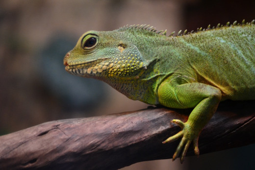 Lizards and other exotic pets can carry harmful germs.