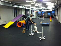 How to Design a Dog Training Schedule