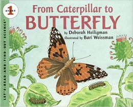 From Caterpillar to Butterfly Big Book (Let's-Read-and-Find-Out Science 1) by Deborah Heiligman - All images are from amazon.com.