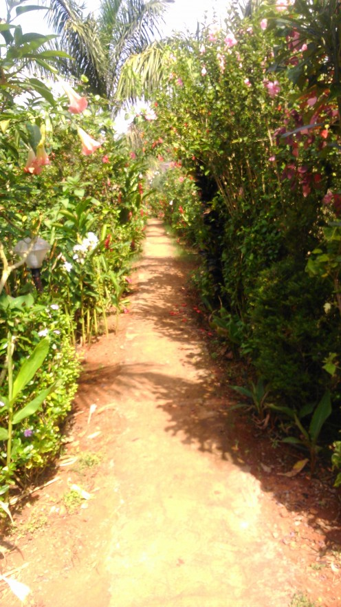One of the paths leading to various places around the resort