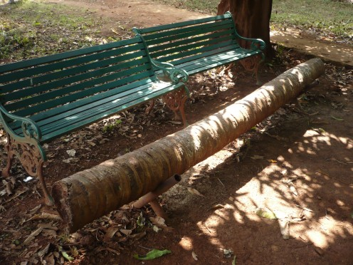 A coconut tree trunk masterfully and simply converted into a bench near the mango tree area