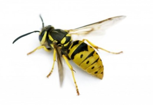 Has your dog been stung by a bee or wasp? Do you know the signs?!