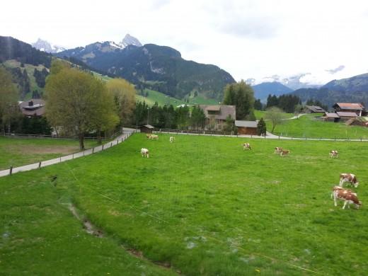 Picturesque Serene Switzerland