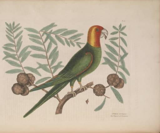 "Illustration in ""The Natural History of Carolina, Florida, and the Bahama Islands"""