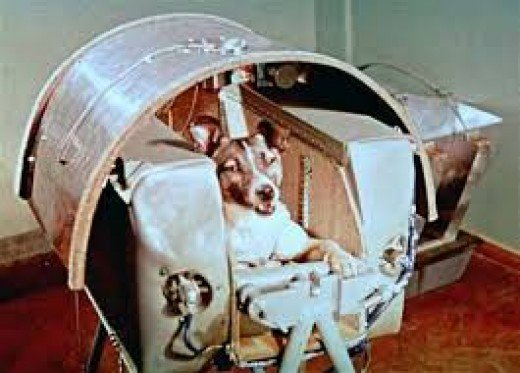 Laika was the First Dog in Space