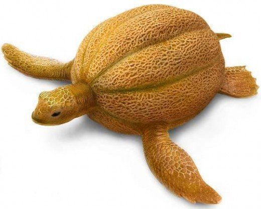 Once you start with fruit animals you just can't stop. Why did the turtle have to get married in his hometown? Because he cantaloupe.