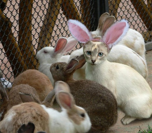 Cats are sneaky. When you least expect it they'll camouflage themselves in a group of bunnies.