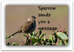 Sparrow Sends A Message