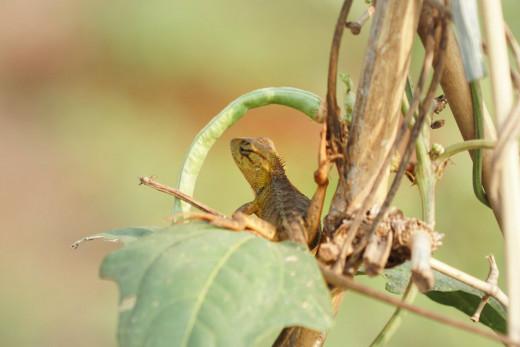 Fauna photography at Cibeureum.