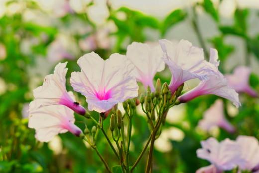 The flora at Cibeureum.