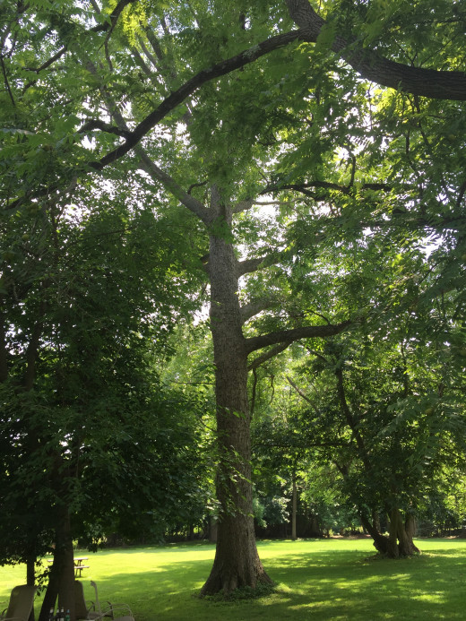 Caring for trees - even if it is simply by clearing up any trash around one - can be a way to bring your ideals to life.