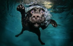 Swimming pools and dogs - the smartest best practices to embrace