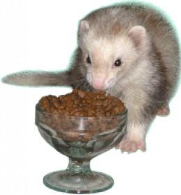 Giving Ferret Cat Food