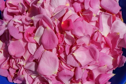 Rose petals for a fragrant bath.