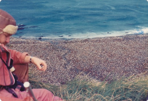 I took this photo of one of our expeditioners looking down from the cliff top above the Lusitania Bay penguin rookery in the Autumn of 1976.